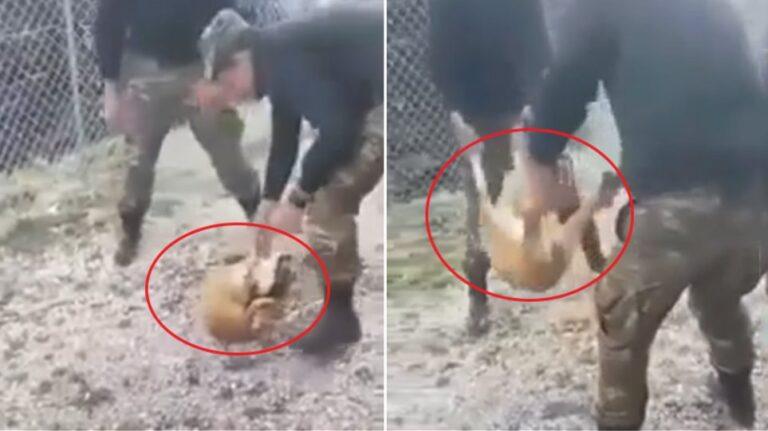 Ταυτοποίηθηκαν οι φαντάροι που κακοποίησαν σκύλο