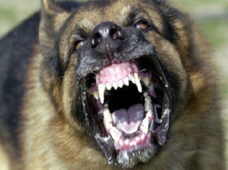 Τρόμος στο Αίγιο – Σκύλος δάγκωσε άνθρωπο και σκότωσε το σκυλάκι του…