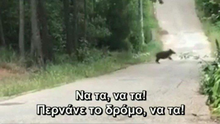 Δεν είναι φάρσα – Αγριογούρουνα έκοβαν βόλτα… στην Εκάλη! (vid)