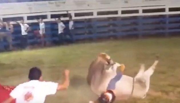 Φρικτός θάνατος 28χρονου από ταύρο σε ροντέο! (vid)