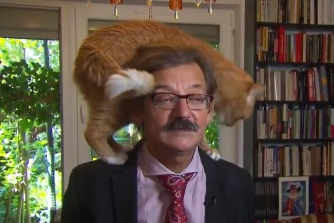 H γάτα έκλεψε την παράσταση στη συνέντευξη