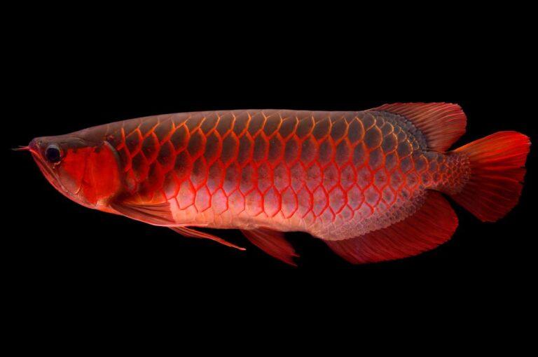 Το ψάρι για ενυδρείο που κοστίζει… 300.000 δολάρια (pics)