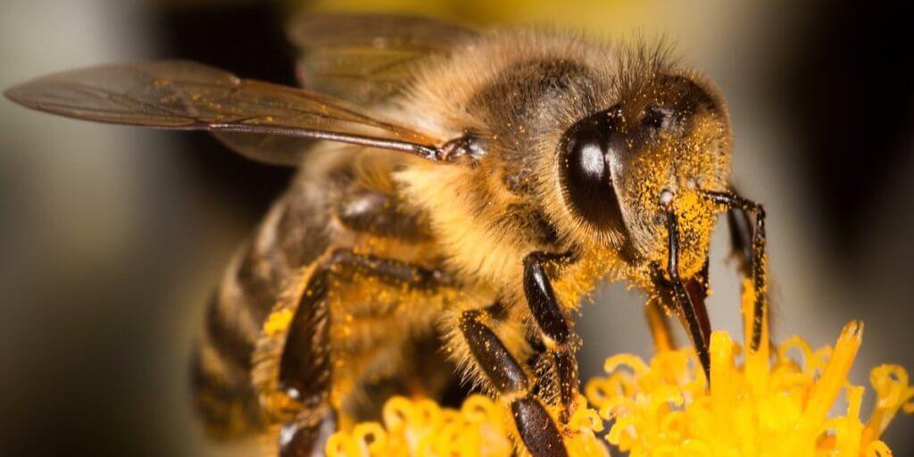 Noσοκόμα σώζει μία μία τις μέλισσες από τη ζέστη – Δείτε τι κάνει