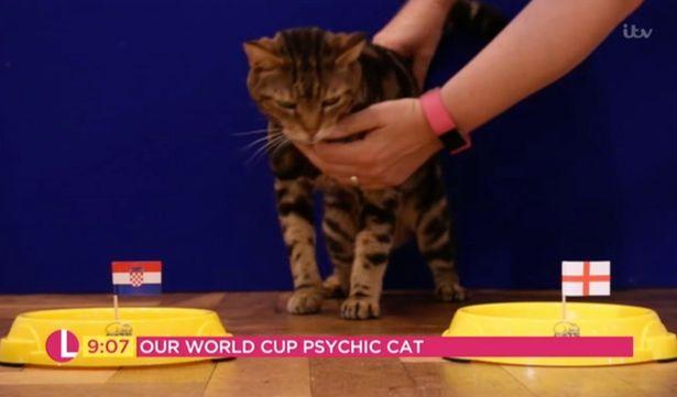 Tι προβλέπει ο άχαστος γάτος για το Αγγλία – Κροατία
