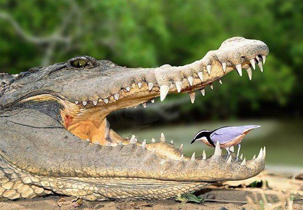 Βγήκε στην πισίνα της και είδε… έναν αλιγάτορα (vid)
