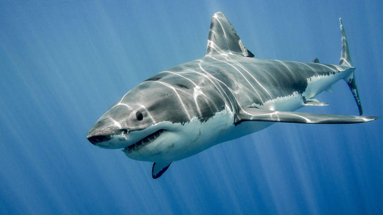 Καρχαρίας παρέσυρε γυναίκα σε νερά με κροκόδειλους
