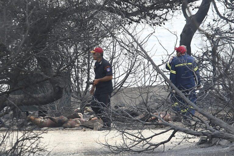 Απίστευτες εικόνες! Τα εναέρια πλάνα από την πυρκαγιά (vid)