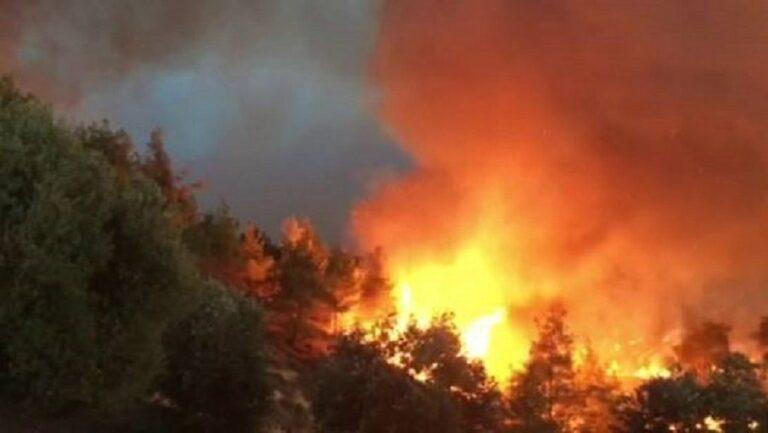 Λακωνία: Μάχη με τις φλόγες στο Οίτυλο