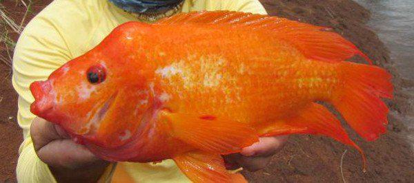 Το ψάρι που αγαπά…τα χάδια (vid)