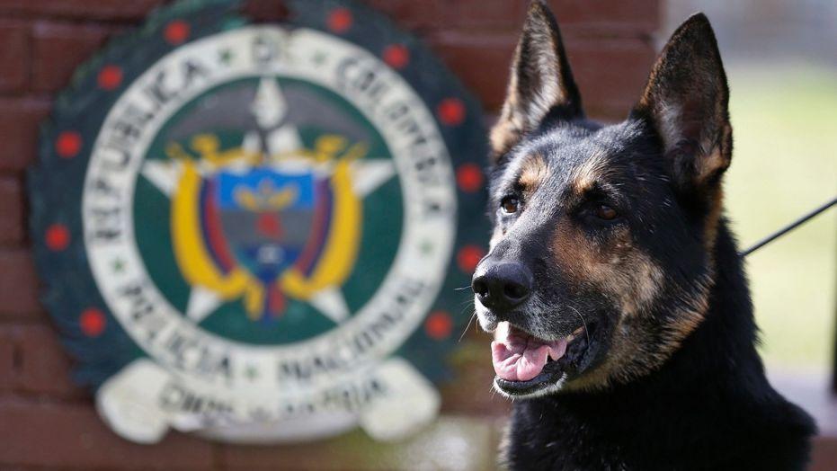 Κολομβιανό καρτέλ επικήρυξε λυκόσκυλο!