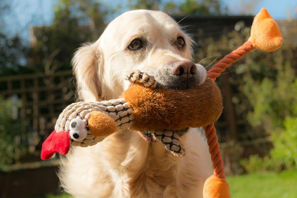 Δείτε το πιο περίεργο παιχνίδι για σκύλους (vid)