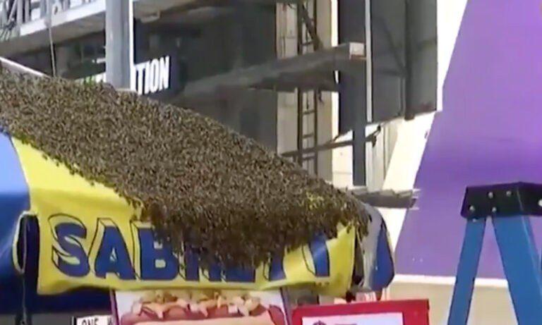 Πανικός στην Times Square: Επιδρομή χιλιάδων μελισσών (vid)