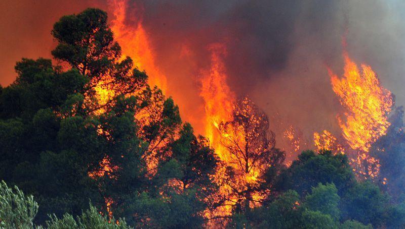 Πάει προς τα Ψαχνά η φωτιά – Εκκενώθηκαν δύο οικισμοί (UPD, pics/vid)