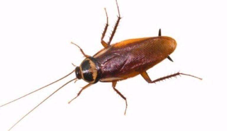 Κατσαρίδες: Η… λιχουδιά του μέλλοντος (vid)