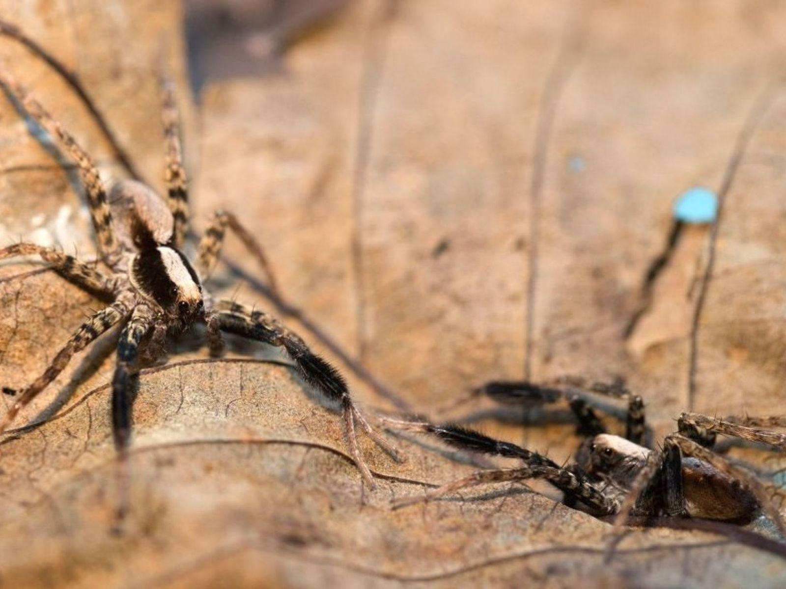 Και όμως!Οι αράχνες έχουν αγαπημένο χρώμα