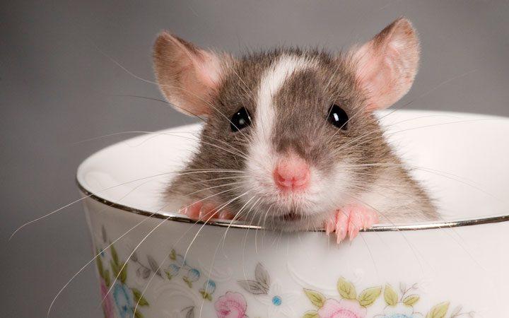 Tους «τρόλαρε» ένα ποντίκι (vid)