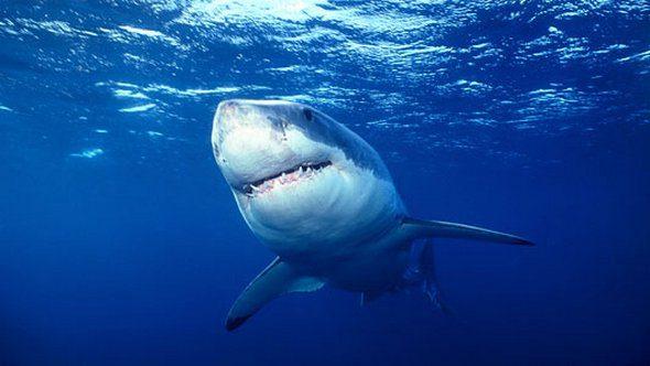 Αυστραλία: Λευκός καρχαρίας περικύκλωσε οικογένεια ενώ έκανε βαρκάδα (vid)