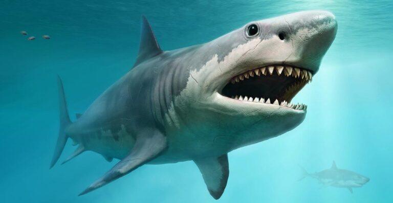 Βούτηξε γυμνός σε δεξαμενή με καρχαρίες (vid)