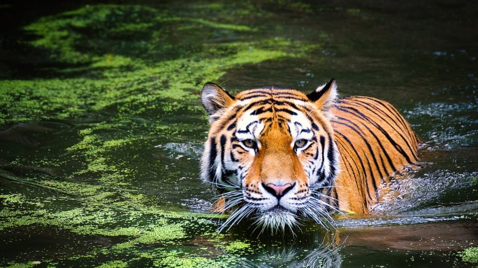 WWF: Ο πλανήτης μας έχασε το 60% του πληθυσμού των άγριων ζώων σε διάστημα 40 ετών!