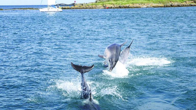 Απίστευτο! Δελφίνι εντοπίστηκε σε ποταμό στο Δουβλίνο (vid)