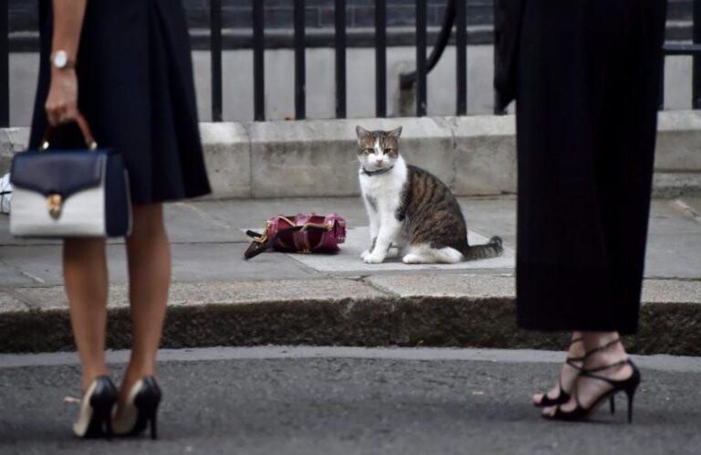 Όταν ο Λάρυ η γάτα, έκλεψε την παράσταση στο… Brexit (vid)