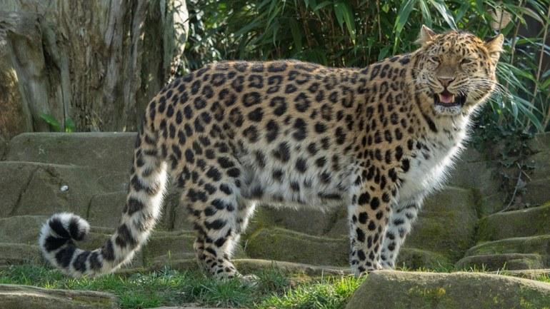 Όταν η λεοπάρδαλη πήρε ταξί (vid)