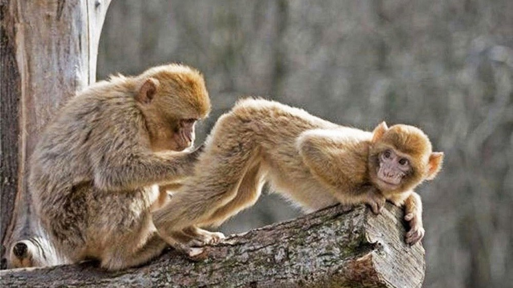 Εμείς φταίμε για τους «πίθηκους» της ζωής μας