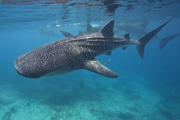 Φάλαινα διασώθηκε από τους ντόπιους στις Φιλιππίνες