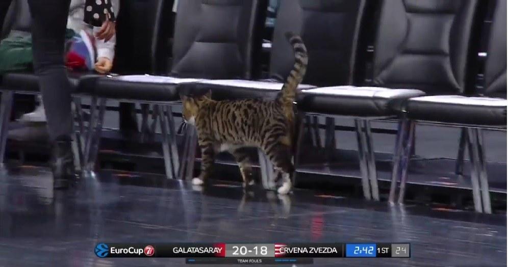 Η γάτα στο «Σινάν Ερντέμ» χτυπά ξανά! (vid)
