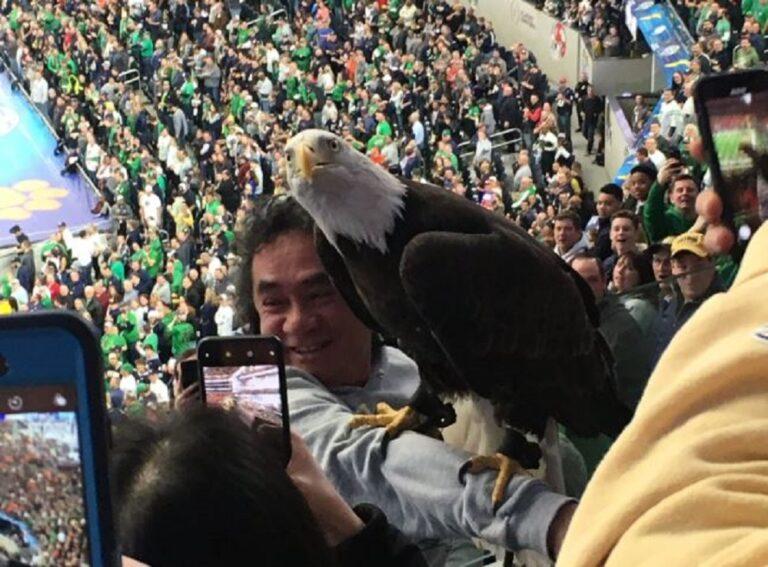 Μοναδικό: Αετός προσγειώθηκε επάνω σε θεατές (vids)