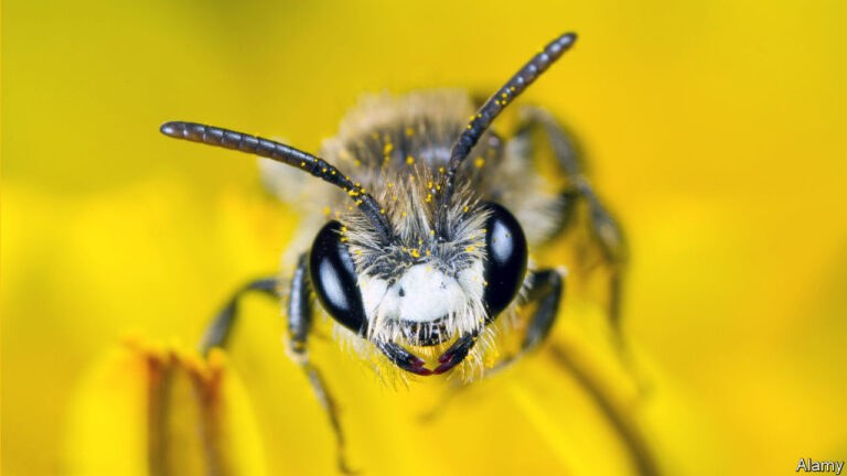 Εμβόλιο για να σωθούν οι μέλισσες