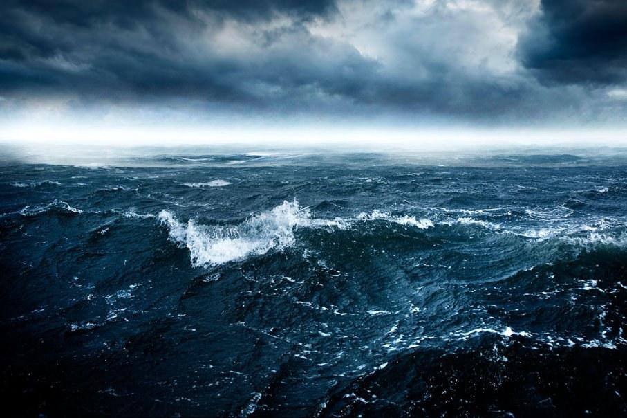 Είδαν κάτι περίεργο να κολυμπά στη θάλασσα και αυτό…μπήκε στη βάρκα (vid)