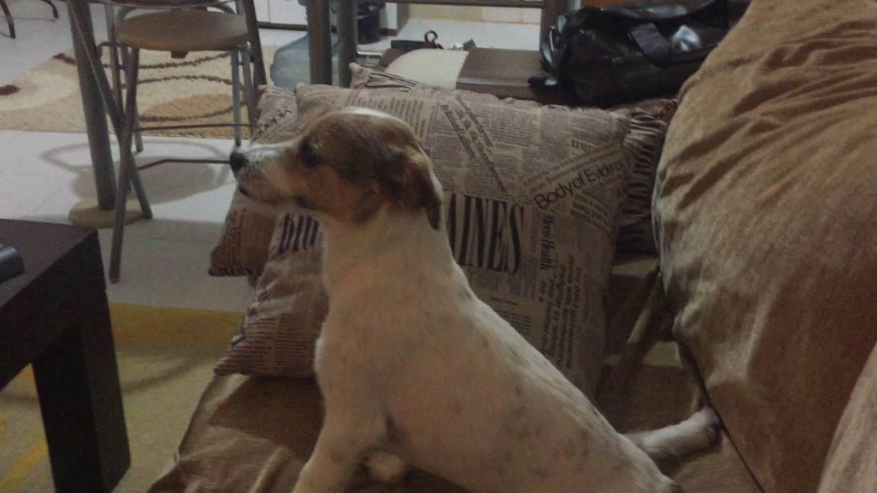 Σκύλος βλέπει θρίλερ και γίνεται viral (vid)