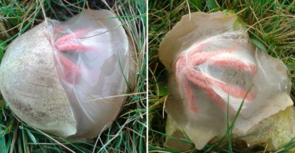 Δες γιατί το αυγό αυτό έγινε…viral (vid)