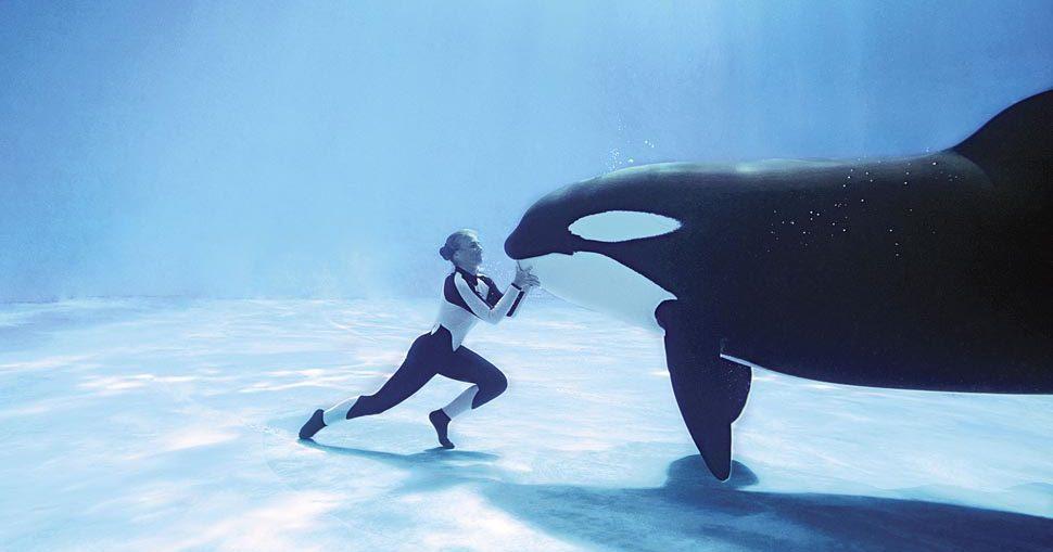 Φάλαινες δολοφόνοι περιτριγυρίζουν κολυμβήτρια (vid)
