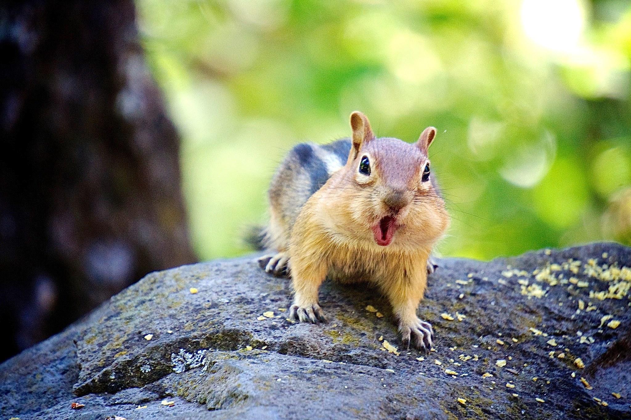 Η μεγαλύτερη απειλή του παγκόσμιου ιστού είναι…οι σκίουροι (vid)