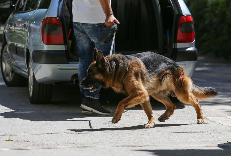 Πέθανε η Agnes, η σκυλίτσα – θρύλος της Δίωξης Ναρκωτικών (vid)