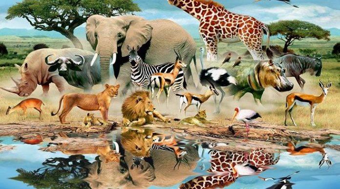 Αυτό είναι το πιο επικίνδυνο ζώο στον πλανήτη (vid)