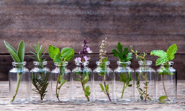 Μπορεί ένα φυτό…να βλαστήσει μέσα στο ανθρώπινο σώμα; (vid)