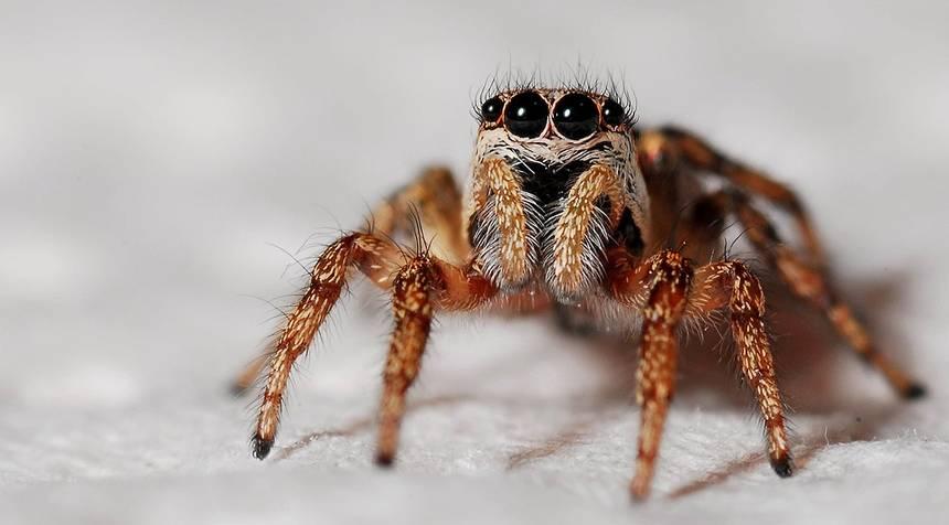 Πήγε να σκοτώσει μια αράχνη και έκανε ζημιά αξίας 11.000