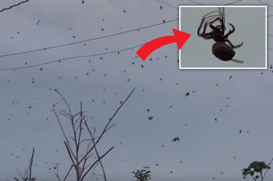 Εφιαλτικό: «Έβρεξε» αράχνες στη Βραζιλία (vid)