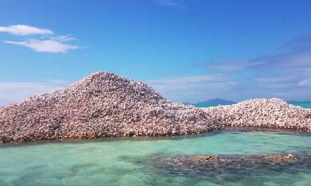 Το νησί που είναι φτιαγμένο από κοχύλια (vid)