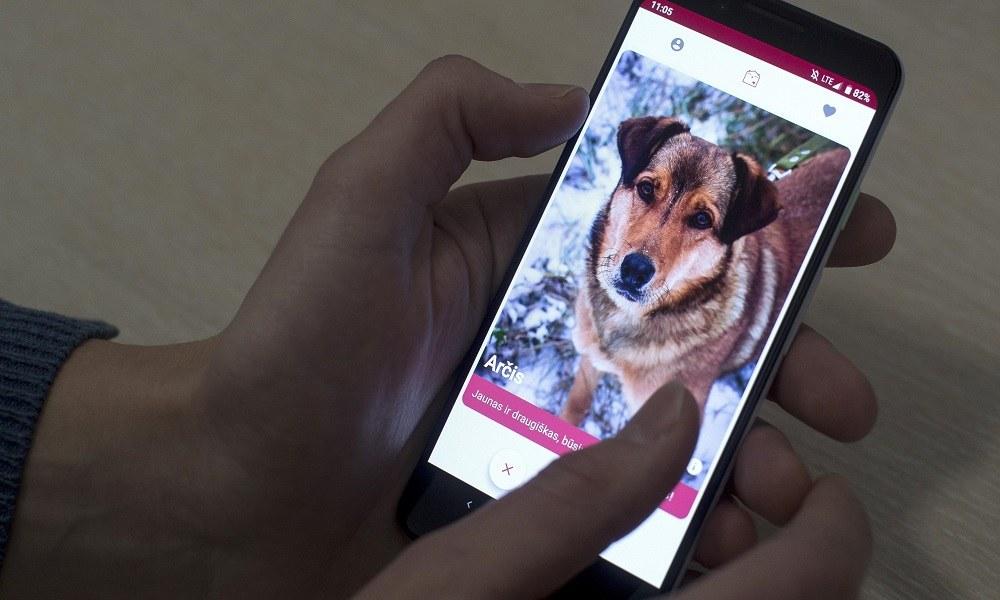 Εφαρμογή εμπνευσμένη από το Tinder βοηθά αδέσποτους σκύλους να βρουν αφεντικά (vid)