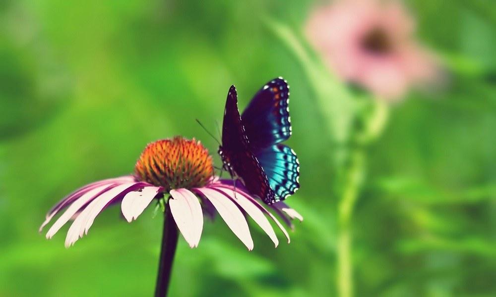 Τα έντομα αφήνουν την «υπογραφή» τους στα λουλούδια που επισκέπτονται