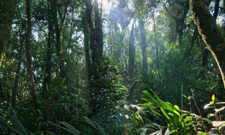 Τα πιο παράξενα πράγματα που βρέθηκαν ποτέ στη ζούγκλα (vid)