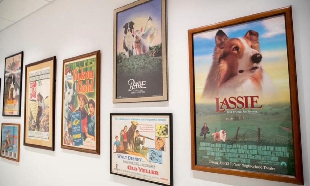 Μουσείο υψηλής τέχνης για σκύλους στη Νέα Υόρκη (vid)