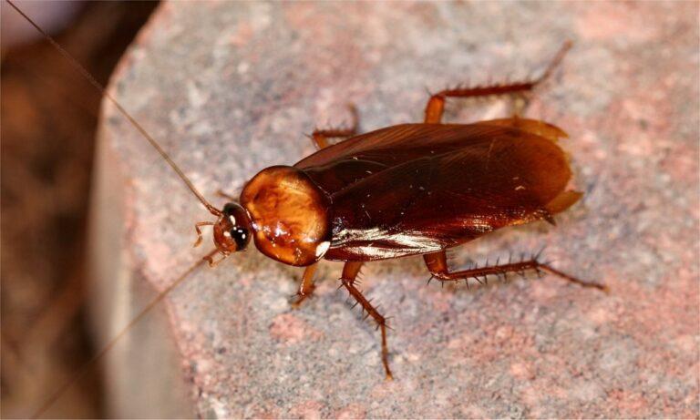 Τα επτά πράγματα που δεν γνωρίζατε για τις κατσαρίδες