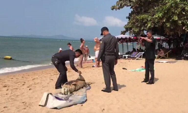 «Μυστηριώδες» πλάσμα  ξεβράστηκε σε παραλία της Ταϊλάνδης