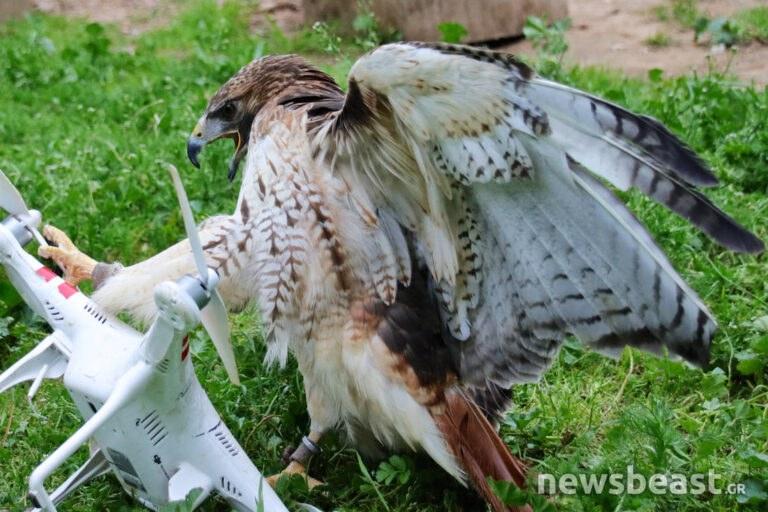 Γεράκια στο πλευρό της ΕΛ.ΑΣ για την κατάρριψη drones;