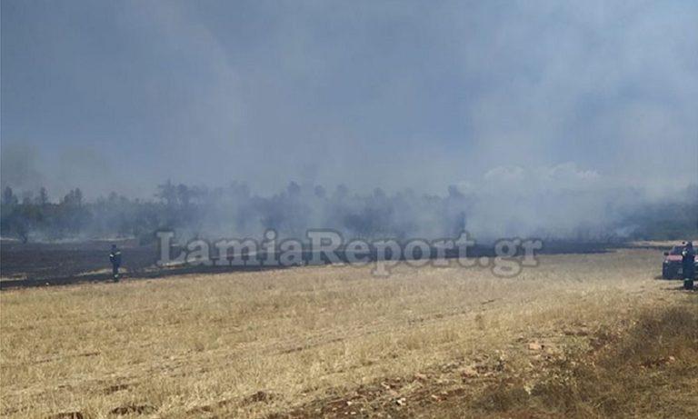 Φωτιά σε δασική έκταση στο Μαρτίνο Φθιώτιδας